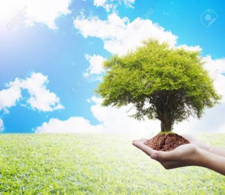Stage d'été pour adultes - l'arbre thérapeutique : trouver sa voie par l'art-thérapie