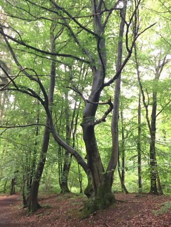 Bain de Forêt: à la découverte des Eco-Pratiques en Forêt de Soignes